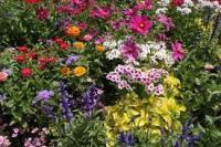 Riotous flower garden